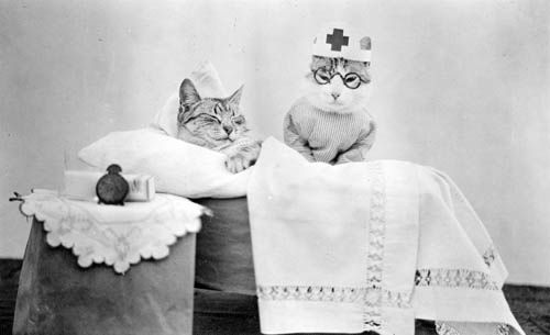 What about these cat nurses? Surely you forgive me now...
