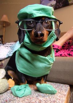 Please look at this surgeon dog. LOOK AT IT. This makes me feel better already. Hopefully he will help you to forgive my mortal foibles.